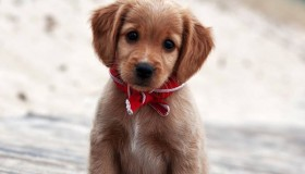 The Cutest Dogs Online