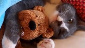 Funny Cat Videos: So Cute!