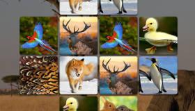 Animal Memory