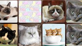 Cat Puzzle Game