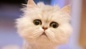Funny Cats: Top 5 Videos